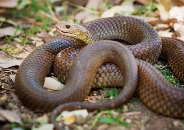 The Best Pet Snake for a Beginner (14)
