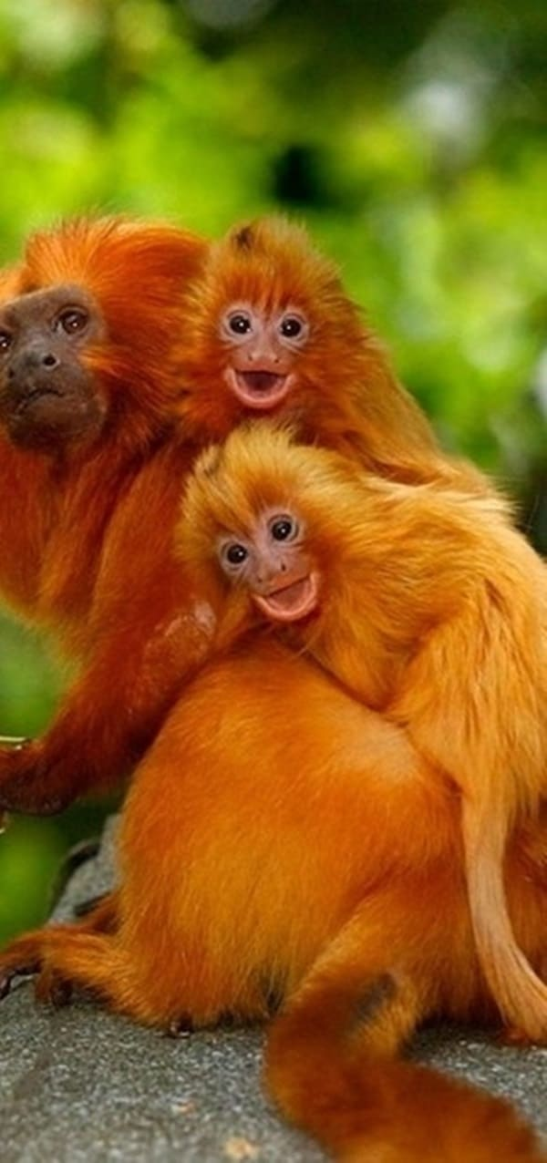 animals carrying their baby (12)
