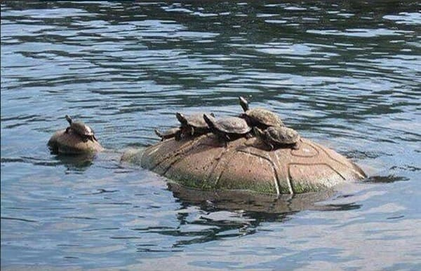 animals carrying their baby (21)