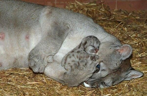 animals carrying their baby (23)