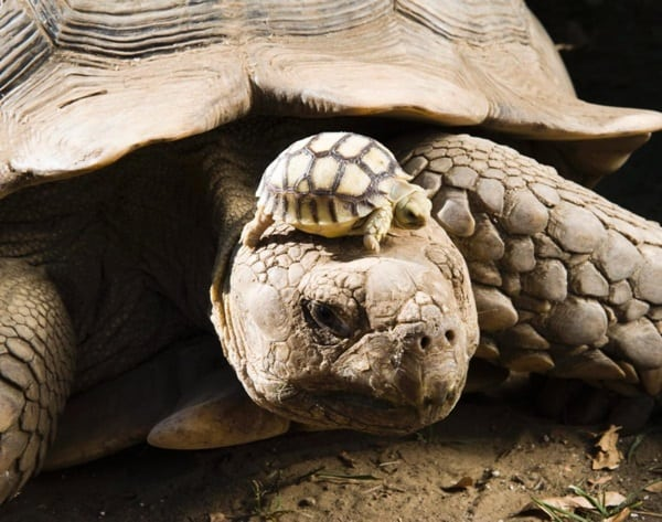 animals carrying their baby (34)