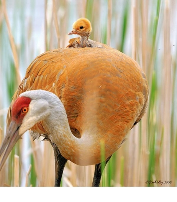 animals carrying their baby (6)