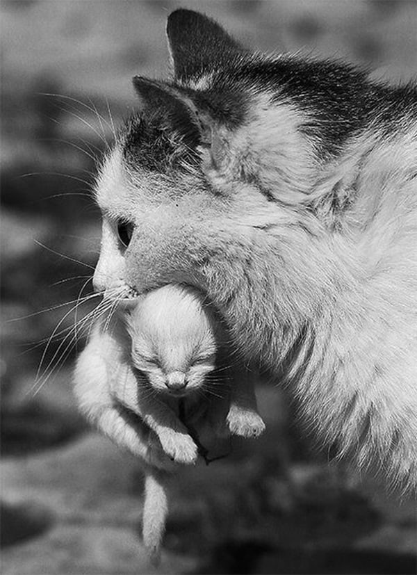 animals carrying their baby (8)