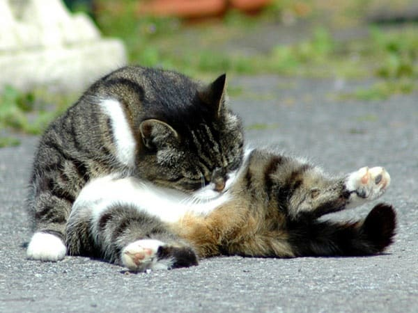 animals cleaning itself (17)