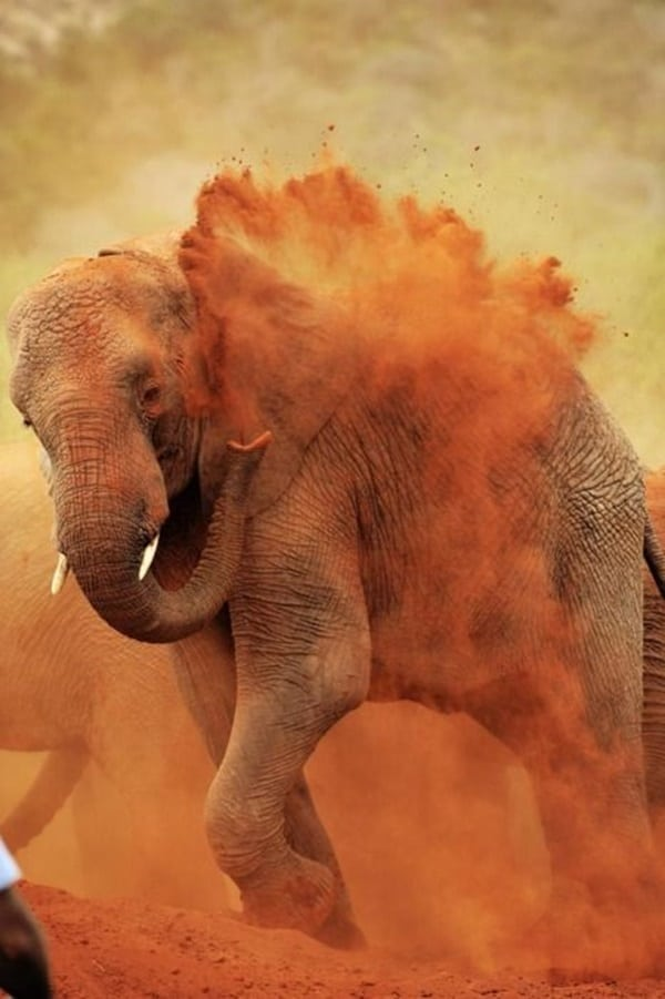 animals cleaning itself (22)