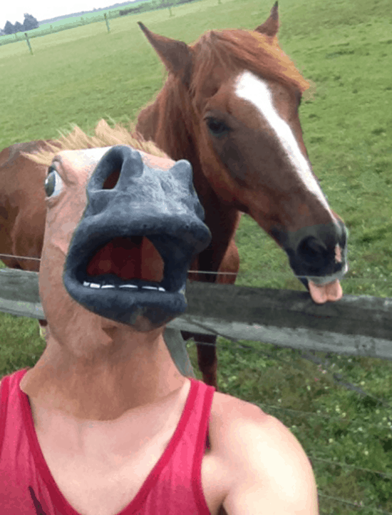 funny horse mask pictures (1)