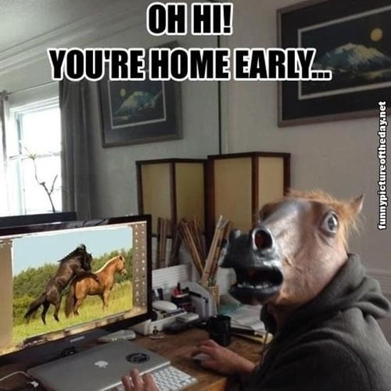 funny horse mask pictures (10)