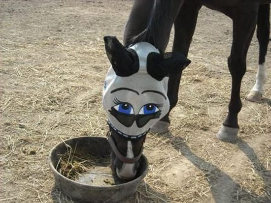 funny horse mask pictures (12)