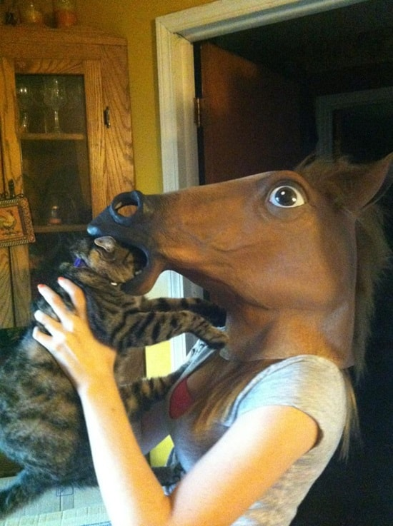 funny horse mask pictures (17)