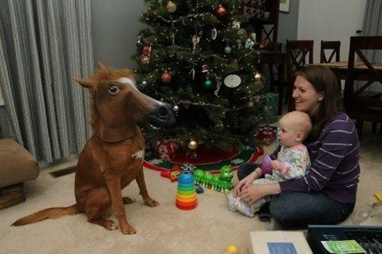 funny horse mask pictures (2)