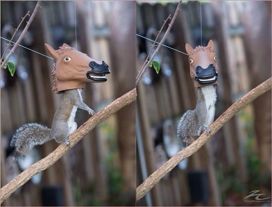 funny horse mask pictures (23)