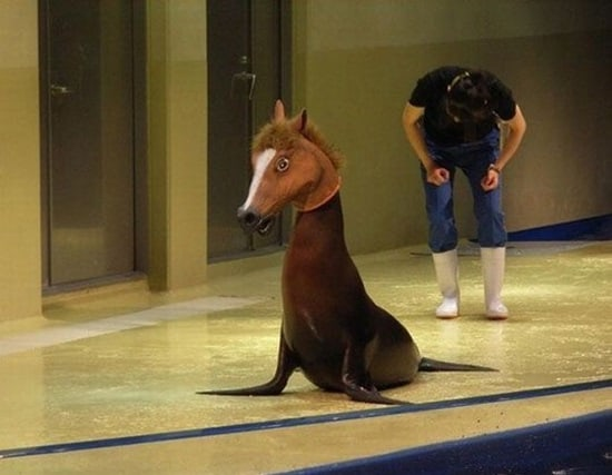 funny horse mask pictures (32)