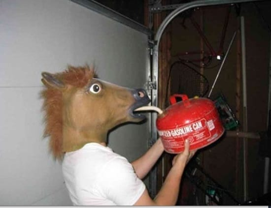funny horse mask pictures (37)