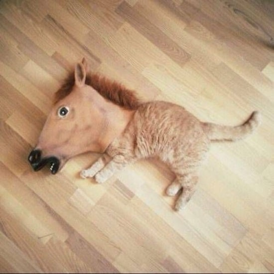 funny horse mask pictures (5)