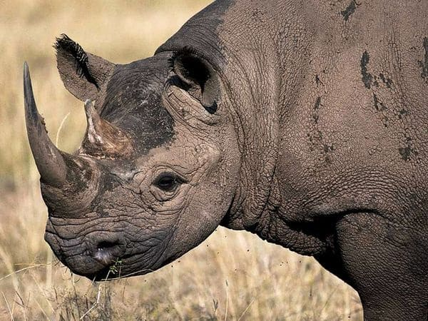 Animals hunted to extinction12