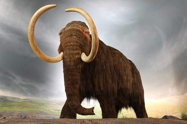 Animals hunted to extinction2