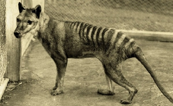 Animals hunted to extinction5