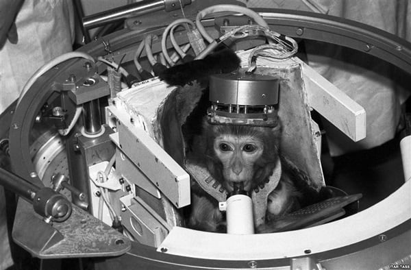 Animals launched in space2