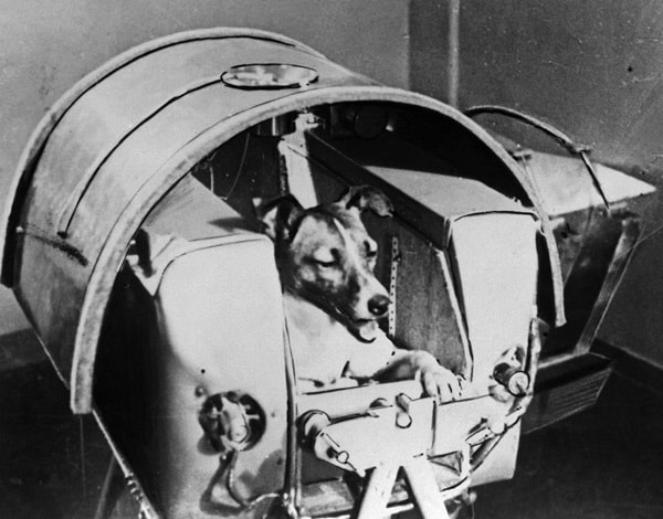 Animals launched in space4