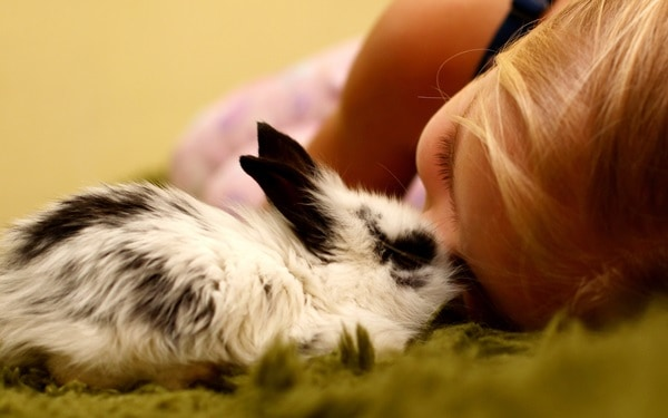 Causes of sudden death in rabbits3
