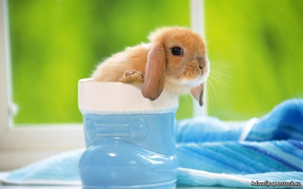 Causes of sudden death in rabbits7