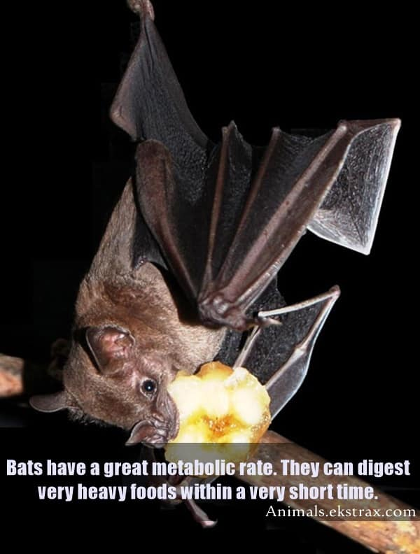 Interesting Facts About Bats (1)