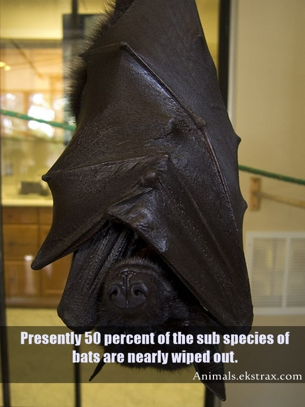 Interesting Facts About Bats (13)