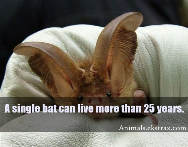 Interesting Facts About Bats (3)