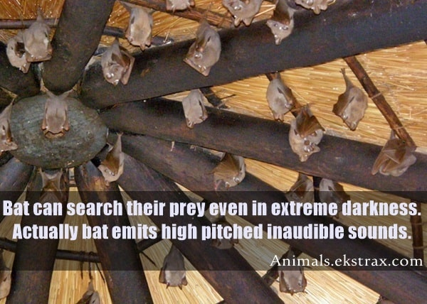 Interesting Facts About Bats (6)