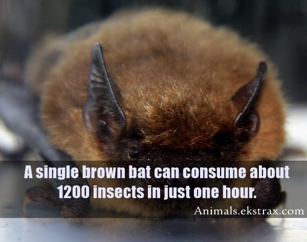 Interesting Facts About Bats (7)