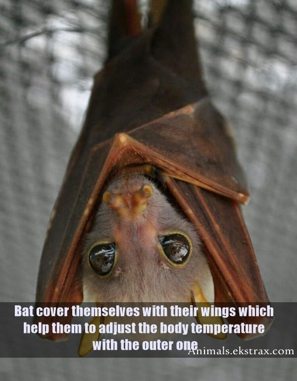 Interesting Facts About Bats (9)