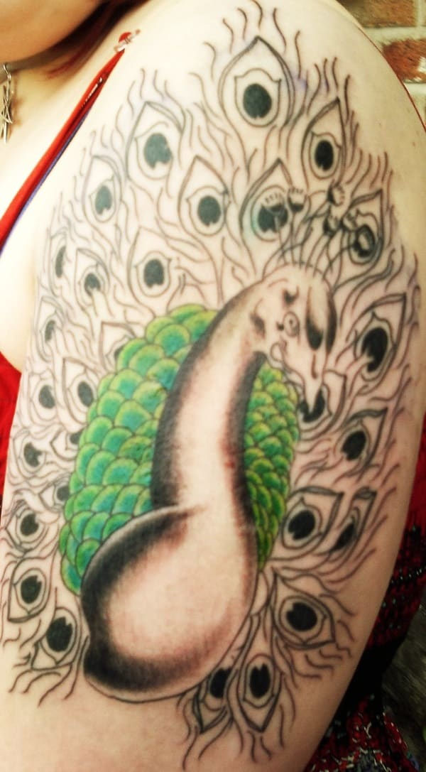 Pictures of Peacock Tattoos (15)