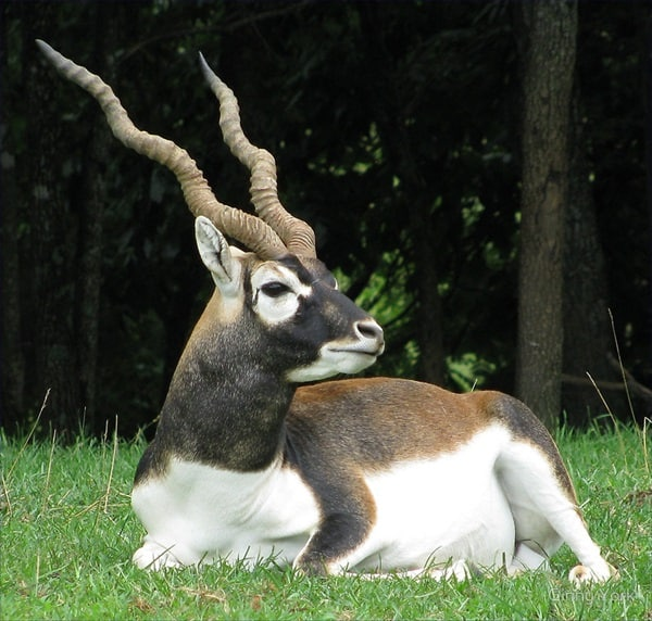 animals with horns (18)