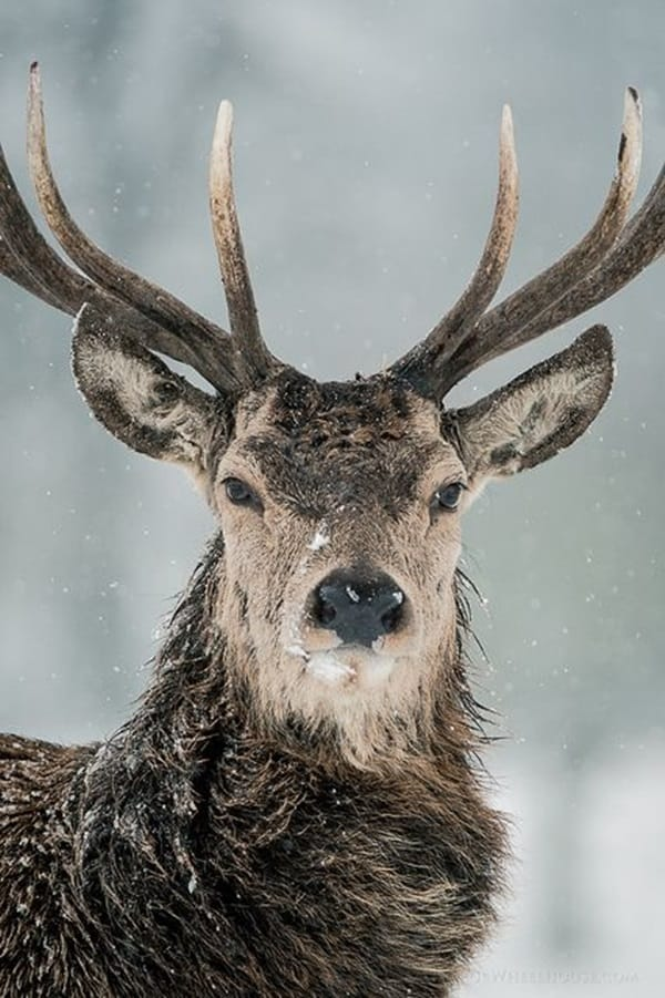 animals with horns (21)