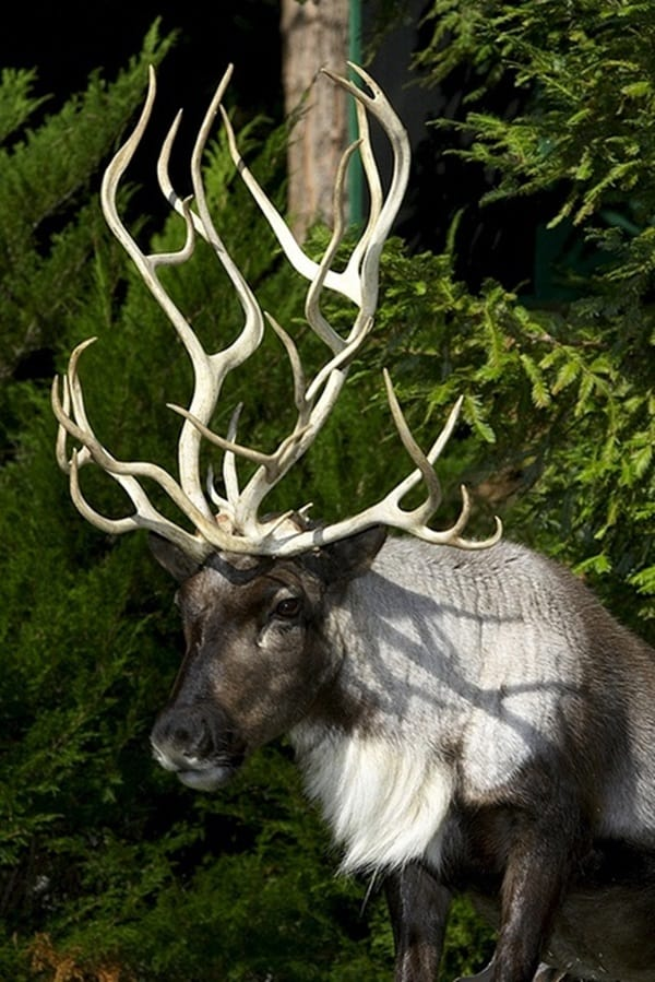 animals with horns (22)