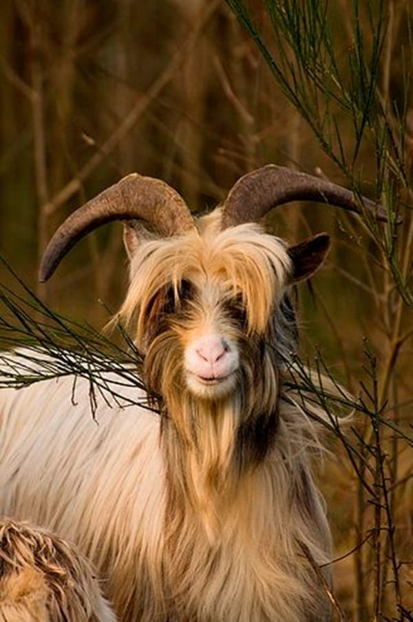 animals with horns (30)
