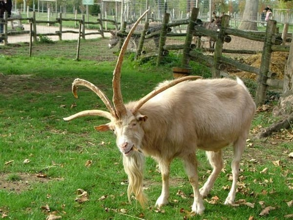 animals with horns (6)