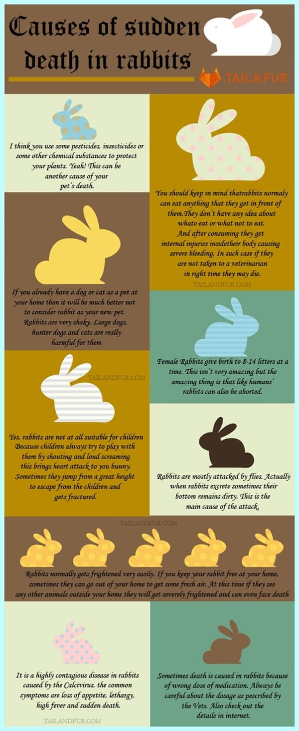 13 Most Common Causes of Sudden Death in Rabbits
