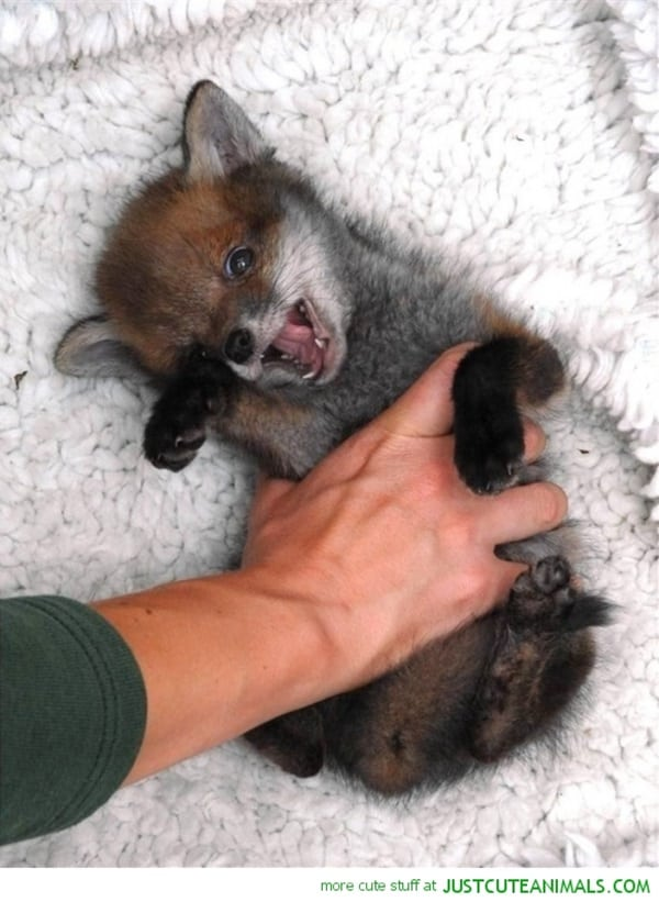 Cute tickling animals pictures (18)