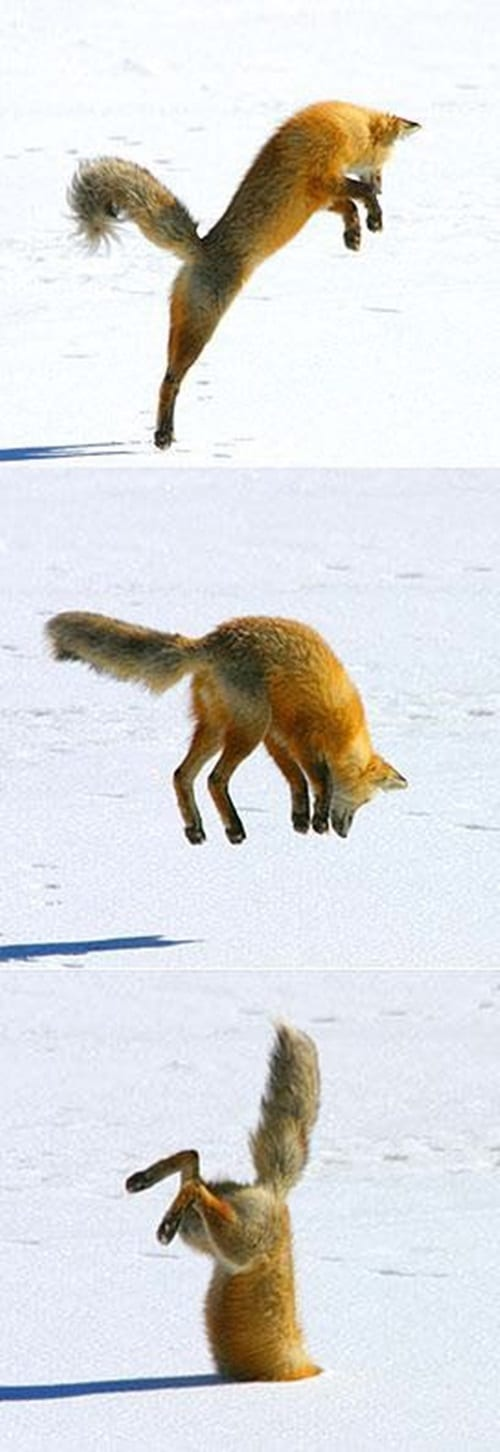 Pictures of Animals Playing with Snow (1)
