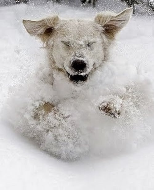 Pictures of Animals Playing with Snow (10)