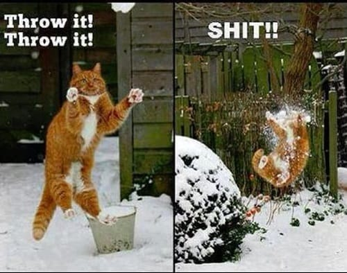 Pictures of Animals Playing with Snow (11)