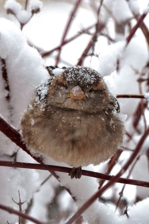 Pictures of Animals Playing with Snow (12)