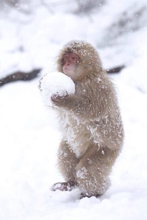 Pictures of Animals Playing with Snow (13)