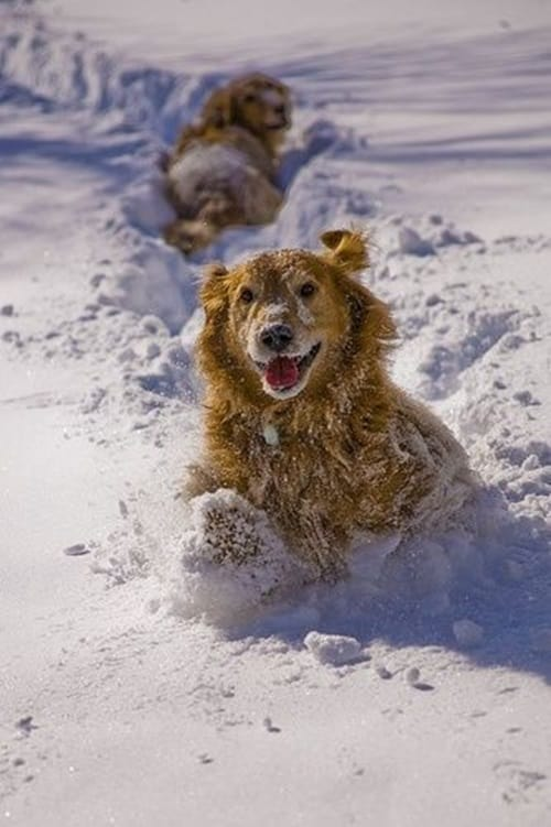 Pictures of Animals Playing with Snow (15)