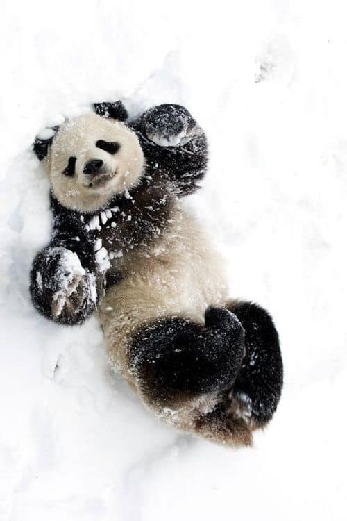 Pictures of Animals Playing with Snow (2)
