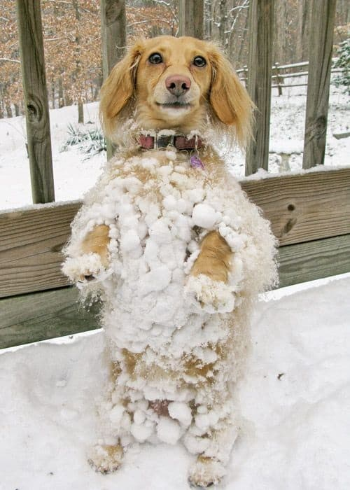 Pictures of Animals Playing with Snow (24)