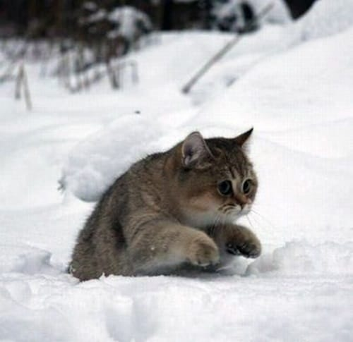 Pictures of Animals Playing with Snow (25)