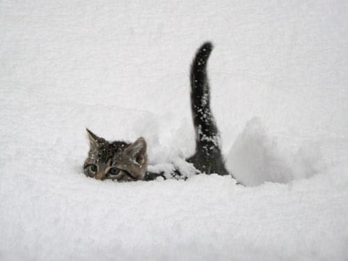 Pictures of Animals Playing with Snow (26)