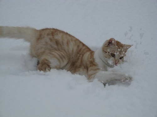 Pictures of Animals Playing with Snow (27)
